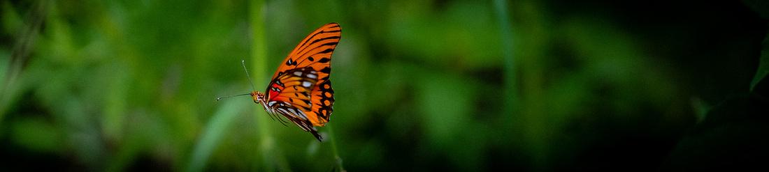 20180907_Butterfly Dreams_4